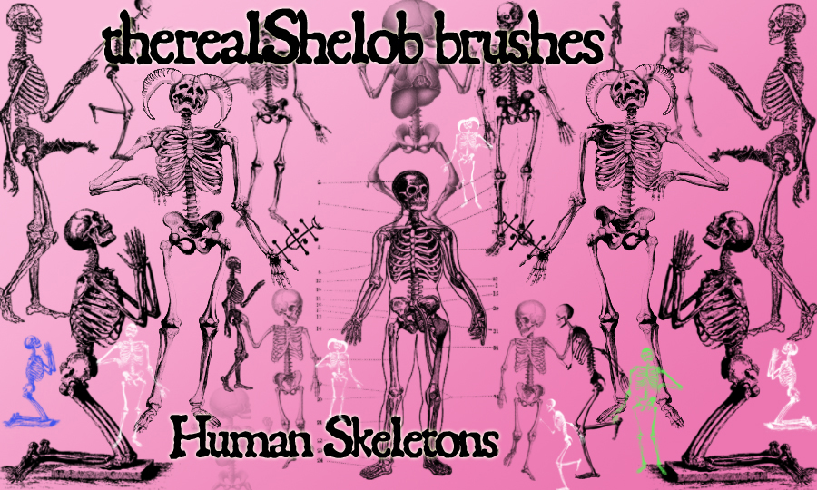 Human_Skeletons_by_therealShelob